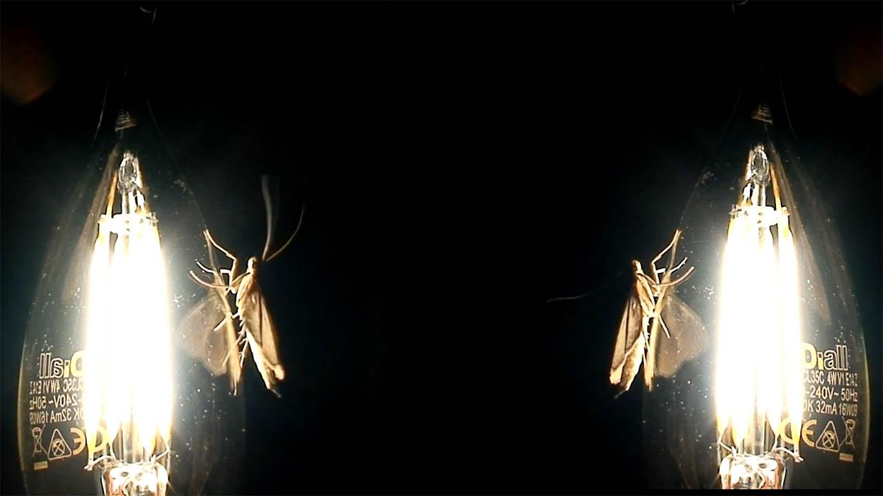 mothman news image.jpg